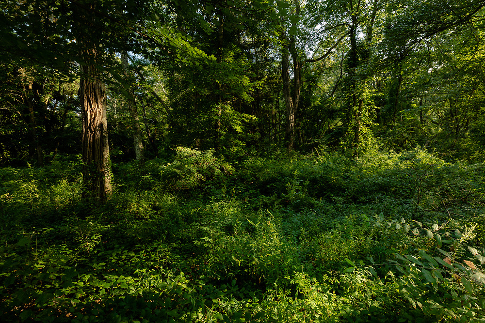 The vibrant green forests of Minuteman National Park on a hot summer afternoon.