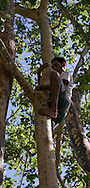 Peter rigs a rope above a bird watching platform, 45 meters up an iron wood tree. The community could earn about $3200 by cutting this tree down, but they elect to use it for ecotourism.