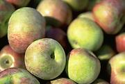 Close up selective focus photograph of a pile of Macoun Apples