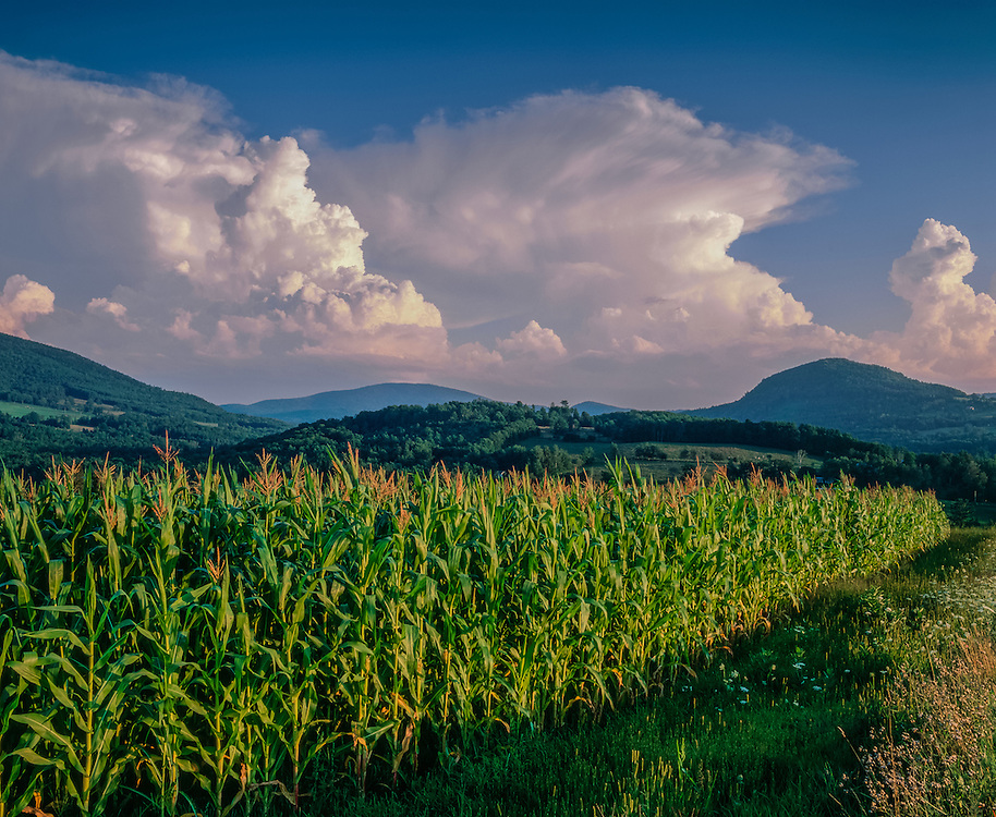 Cornfield in summer with rolling hills in distance, dramatic clouds, Barnet, VT