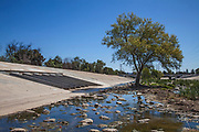 Tree grows in the Los Angeles River, Glendale Narrows, Los Angeles, California, USA