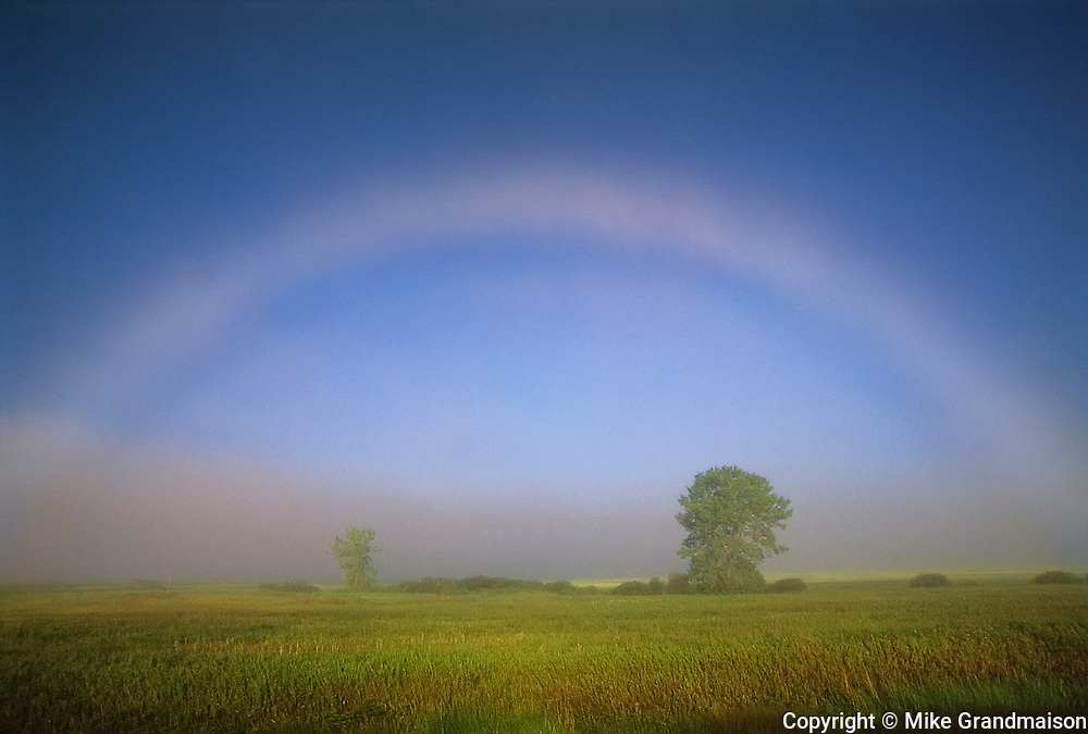 Fogbow or white rainbow with tree<br />