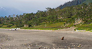 An Alaska coastal brown bear sits on the shore of Chinitna Bay, Lake Clark National Park, Alaska, with three airplanes in the background.
