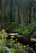 Wildflowers along the West Fork Yaak River. Yaak Valley, northwest Montana