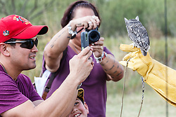 People photographing Eastern screech owl at Raptor Show by Last Chance Forever rehabilitation center, Mitchell Lake Audubon Center, San Antonio, Texas, USA.