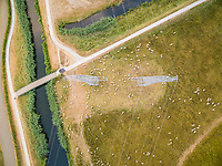 Aerial view of flock of sheep grazing grass under high voltage power lines, Netherlands.