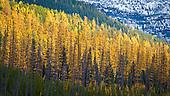 Trees Rocky Mountains