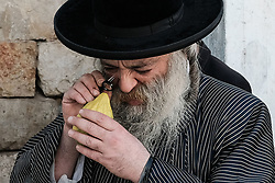 October 3, 2017 - Jerusalem, Israel - A Jewish religious man meticulously inspects an etrog, the fruit of a citron tree and one of the 'Four Species' as ordered in Leviticus 23:40, in the Mea Shearim neighborhood. Any slight imperfection invalidates the fruit. Preparations are underway for Sukkot, the Jewish Feast of Tabernacles. (Credit Image: © Nir Alon via ZUMA Wire)