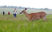 Wildlife around Charlottesville, VA.  Credit Image: © Andrew Shurtleff