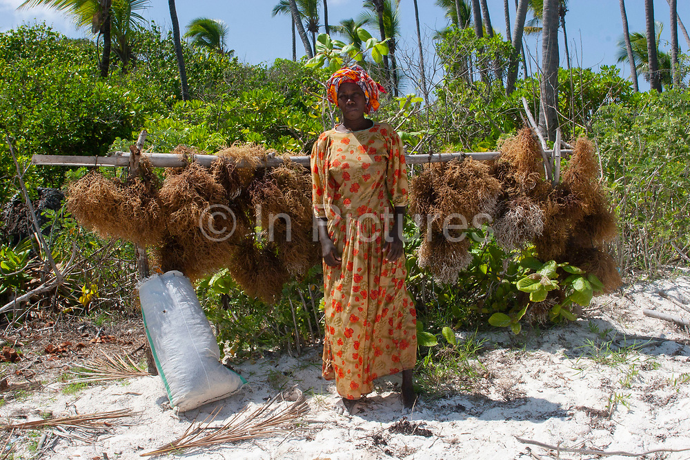 Women collect and cultivate seaweed in the shallow water at low tide at Matemwe beach on 13th December 2008 in Zanzibar, Tanzania. Each woman has a little submerged field of seaweed which is held down in rows. Once collected they dry the seaweed which is then sold ofr export, usually to be used as as a food thickener or stabiliser. Zanzibar is a small island just off the coast of the Tanzanian mainland in the Indian Ocean. In part due to its name, Zanzibar is a travel destination of mystical reputation, known for its incredible sealife on its many reefs, the powder white coral sand beaches and the traditional cultivation of spices.