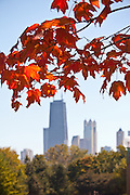 Autumn leaves in Lincoln Park with the Chicago skyline.