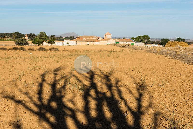Árbol seco y casa de labor.  Almansa. Albacete ©Antonio Real Hurtado / PILAR REVILLA