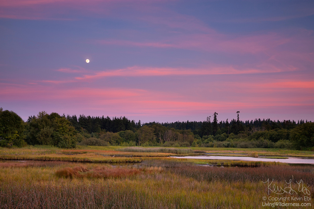 The nearly full moon rises at sunset over Edmonds Marsh in Edmonds, Washington. The 23-acre saltwater marsh is home to more than 200 species of birds each year and is one of the last remaining saltwater estuaries in the greater Seattle area.