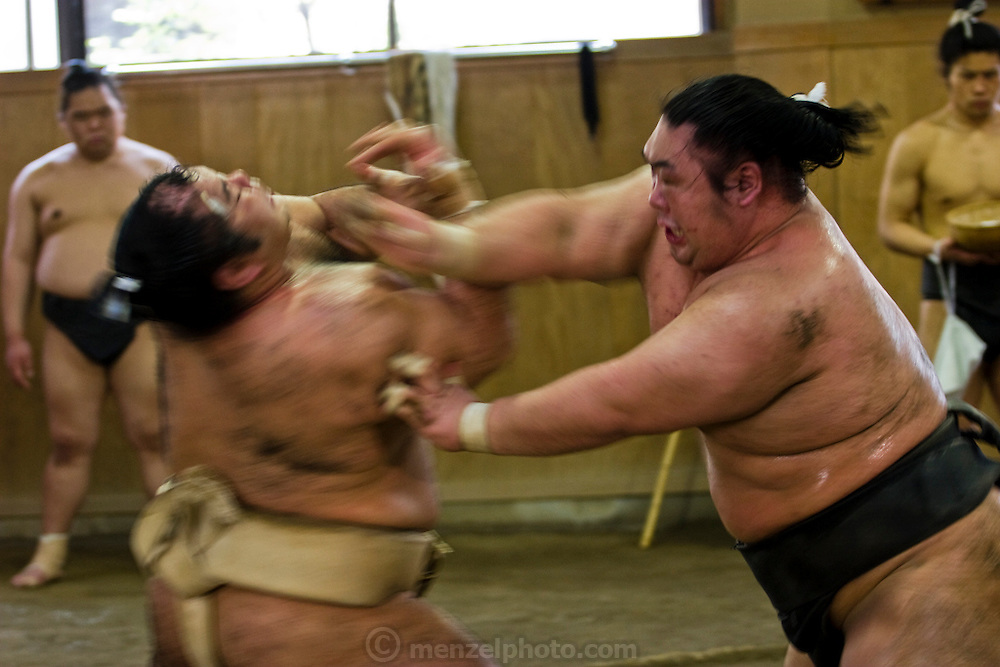 Wrestlers of the Professional Sumo Team (Musahigawa Beya) go through agressive practice bouts at their stable in Tokyo, Japan.