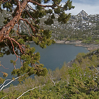 An Incense Cedar tree <br /> (Calocedrus decurrens) frames Lake Sabrina in the Eastern Sierra Nevada near Bishop, California.