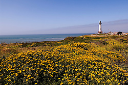 California, San Francisco: Wildflowers and the Pigeon Point Lighthouse on the San Mateo Coast..Photo #: 35-casanf477-30947.Photo © Lee Foster 2008