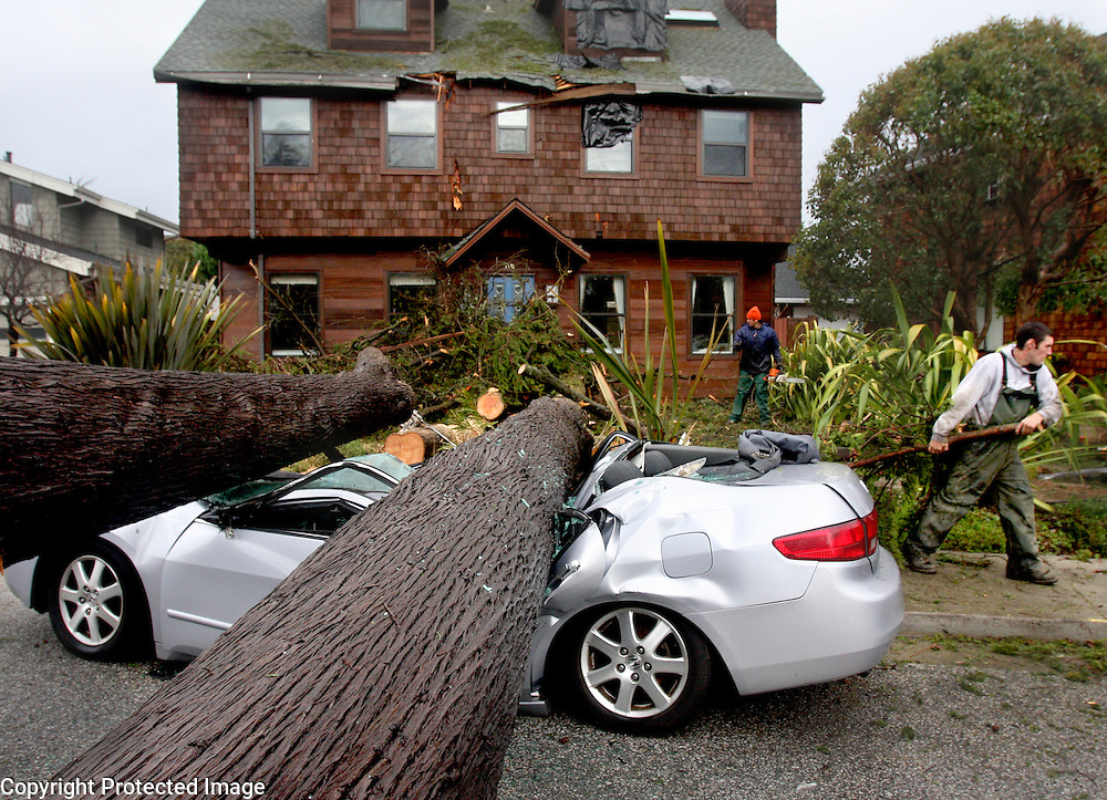 Erik Pegoda begins to clear the debris as Gitta Ryle's damaged Clark Avenue home and Steve Capasso's crushed car show the damage caused by the strong winds that toppled a 100 foot Monterey Cypress  on Tuesday January 19, 2010. Ryle, 77, who is a Holocaust survivor, has been worried for the past 25 years about the danger the tree posed if it fell.  <br /> Photo by Shmuel Thaler <br /> shmuel_thaler@yahoo.com www.shmuelthaler.com