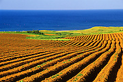 Very early growth potatoes on red soil with Gulf of St. LAwrence<br /> Cape Tryon<br /> Prince Edward Island<br /> Canada
