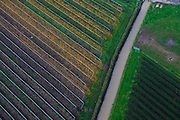 Nederland, Utrecht, Houten, 15-11-2010;.Boomkwekerij in de late herfst. Tree nursery in the late fall..luchtfoto (toeslag), aerial photo (additional fee required).foto/photo Siebe Swart