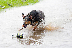 While the threatened floods around Sheffield were of concern to some for others like  Wallace the dog it was a chance to get out and have some fun.<br /> 6 July 2012<br /> Image © Paul David Drabble