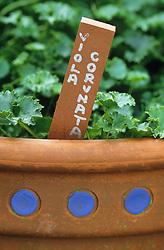 Detail of terracotta plant label