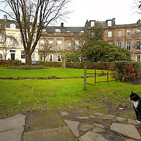 No dog fouling and cat in private gardens in Glasgow