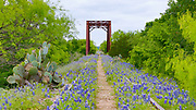 Bluebonnets cover abandoned railroad tracks and trestle in Texas