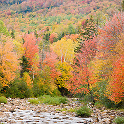 Fall colors along the Swift River in Maine's northern forest. Byron, Maine.