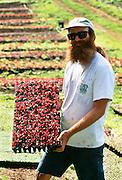 Sun Bear Farm, Farming, Kealakekua, Island of Hawaii