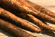 Close up photograph of some Burdock roots on a table