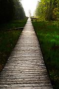 Range Light Boardwalk at The Ridges Sanctuary, Baileys Harbor, Wisconsin, USA.