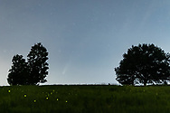 Comet Neowise is visible between the trees in a field by the Moodna Viaduct in the Town of Cornwall, N.Y., on July 18, 2020.
