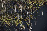 Swamp wetland<br /> Linden town<br /> GUYANA<br /> South America