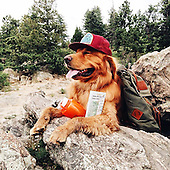Human Takes His Dog On Epic Adventures