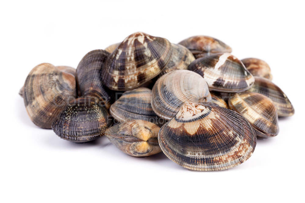 Seafood - Mollusks - Raw clams on white background.