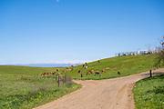 New Zealand Calf Feeding System