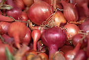 Close up selective focus photograph of a group of Red Shallots