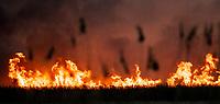 Biebrzanski Park Narodowy, 20.04.2020. Olbrzymi pozar w Biebrzanskim Parku Narodowym. Od niedzieli ( 19.04 ) plonie tam ok. 1000 hektarow lak, torfowisk, trzcinowisk i lasu. Gaszenie pozaru moze potrwac nawet pare dni. BPN jest najwiekszym polskim parkiem narodowym, maja tu swoja ostoje m.in losie oraz liczne gatunki ptakow N/z plonace trzciny i torfowiska fot Michal Kosc / AGENCJA WSCHOD