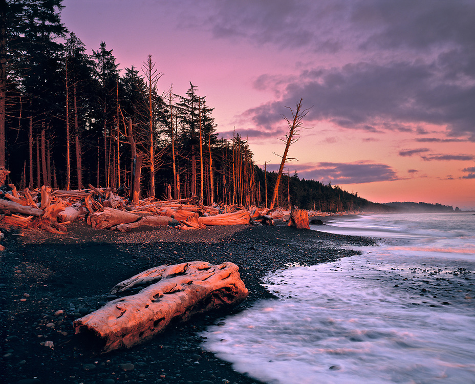 Sunset light colors the piles of driftwood at Rialto Beach, Olympic NP, Washington, a favorite World Heritage Site.