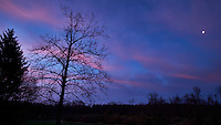 Easter Sunday Moon at Dawn in New Jersey. The Sycamore tree doen't have leaves yet. Image taken with a Fuji X-T1 camera and Zeiss 12 mm f/2.8 lens (ISO 200, 12 mm, f/16, 0.5 sec). Raw image processed with Capture One Pro.