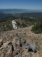 Hike up Taylor Mountain