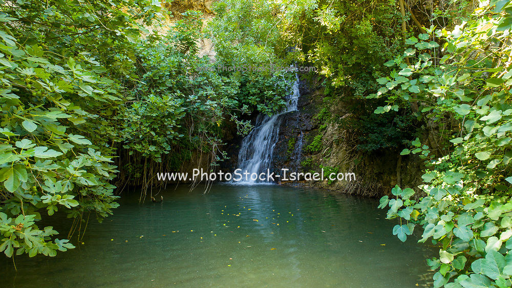 Israel, Upper Galilee, Iyyon River (Nahal Ayun or Ayun Stream) Nature reserve. Photographed in June