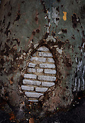 Bricked over hole in ancient damaged plane tree on 28th June 2019 in Ceret, France. Plane trees were widely used in France in the early and mid-19th century, first planted along roadsides on the orders Napoleon to provide shade for troops and travellers moving through the country.