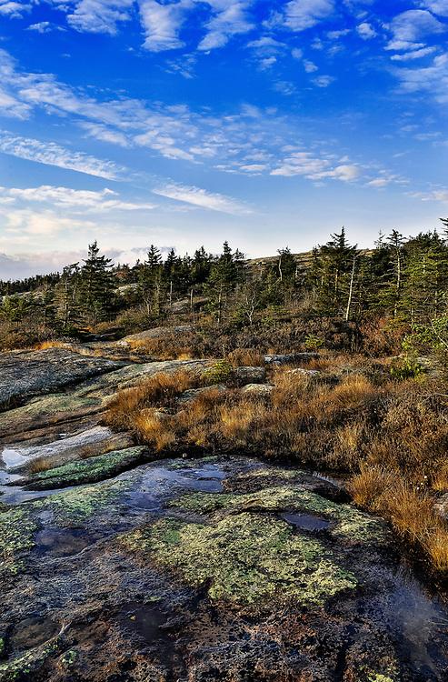 Granite and groundcover foliage, Cadillac Mountain, Acadia, National Park, Maine, USA