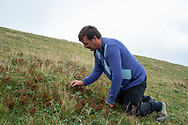 Yilmaz Civelek picking berries on a hill near his home in the small village of Alaca Yaylası, in Turkey's northern Pontic mountains, and a common place for whistling as a method of communication.