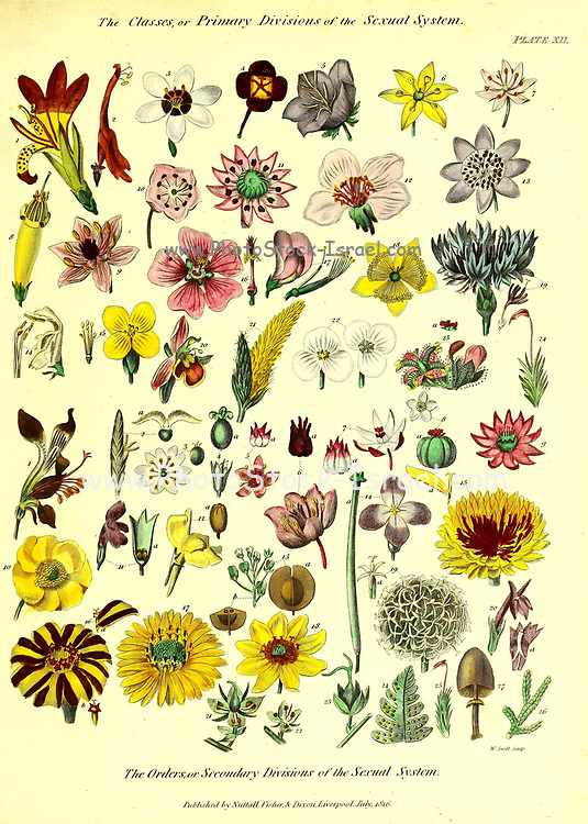 The Classes, or Primary Divisions of the Sexual System from Vol 1 of the book The universal herbal : or botanical, medical and agricultural dictionary : containing an account of all known plants in the world, arranged according to the Linnean system. Specifying the uses to which they are or may be applied By Thomas Green,  Published in 1816 by Nuttall, Fisher & Co. in Liverpool and Printed at the Caxton Press by H. Fisher