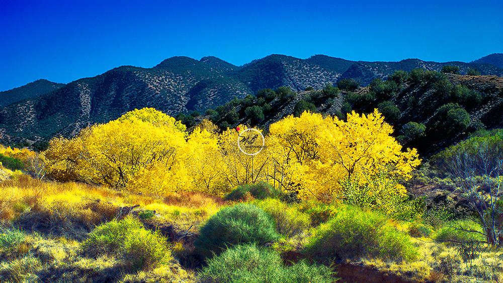 Autumn Landscape New Mexico