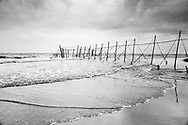 A salmon netter walking along the a fly net owned by Joseph Johnston & Sons at low tide to check whether fish have been caught. Fly nets (or stake nets) were a familiar sight on the sands at St. Cyrus, Aberdeenshire until the late 1990s.<br /> Ref. Catching the Tide 60/96/09 (13th August 1996)<br /> <br /> The once-thriving Scottish salmon netting industry fell into decline in the 1970s and 1980s when the numbers of fish caught reduced due to environmental and economic reasons. In 2016, a three-year ban was imposed by the Scottish Government on the advice of scientists to try to boost dwindling stocks which anglers and conservationists blamed on netsmen.