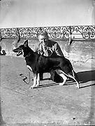 Mr William Murphy, Ballymoney Rd, Dervock, Co Antrim with his German Shepherd  'Koleen of Wolfhill' winner of Best in Show, Bray Dog Show.16/08/1952