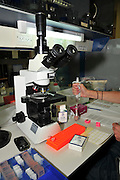 Researcher prepares slides to view under an optical microscope. Photographed at the University of Haifa